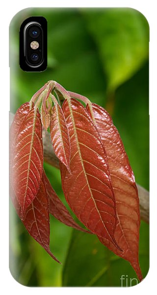 iPhone Case - Cacao Leaf New Growth by Jared Shomo