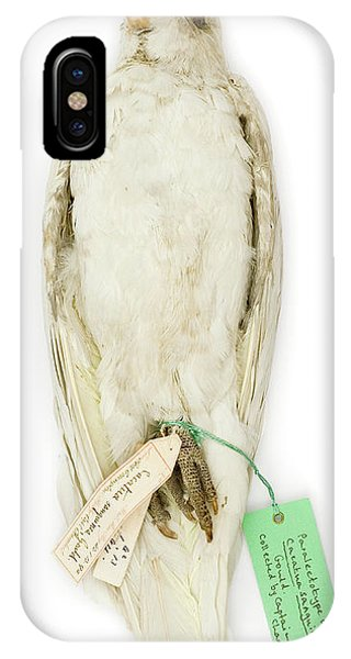 Cockatoo iPhone Case - Cacatua Sanguinea by Natural History Museum, London