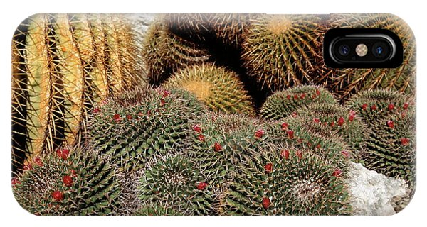 Golden Gardens iPhone Case - Cacti by Philippe Psaila/science Photo Library