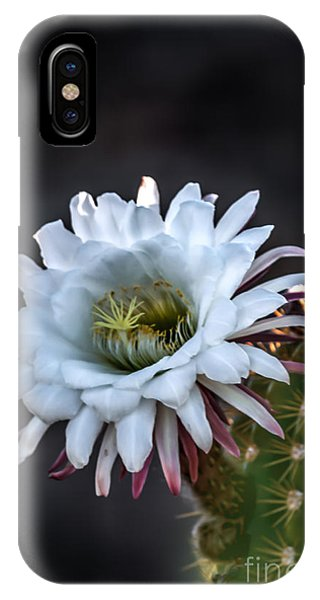 Cactus Beauty IPhone Case