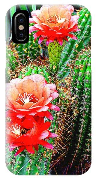Cactus Blooming Arizona Desert IPhone Case