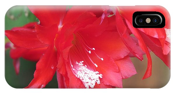 Cactus Blooming Phone Case by Diane Mitchell