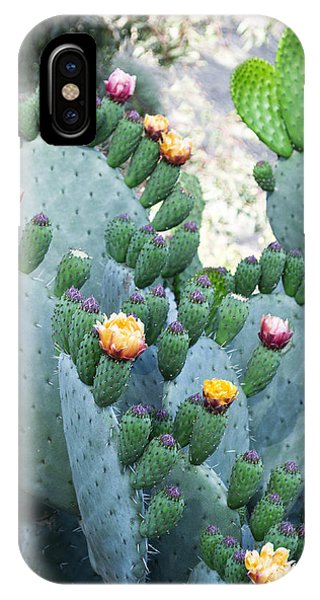 Cactus Buds And Flowers IPhone Case