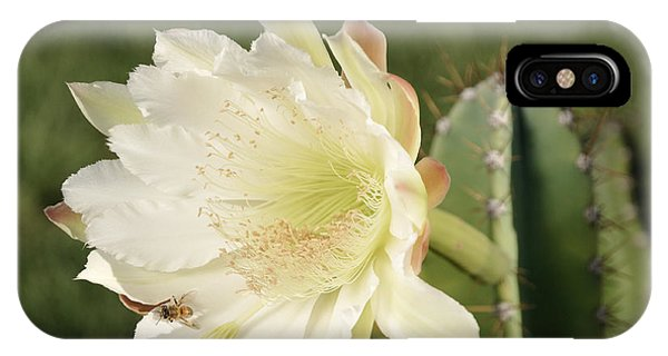 Cactus Flower And Bee IPhone Case