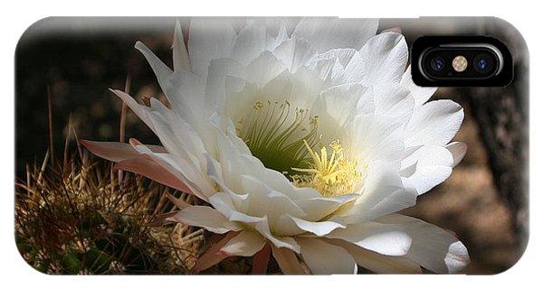 Cactus Flower Full Bloom IPhone Case