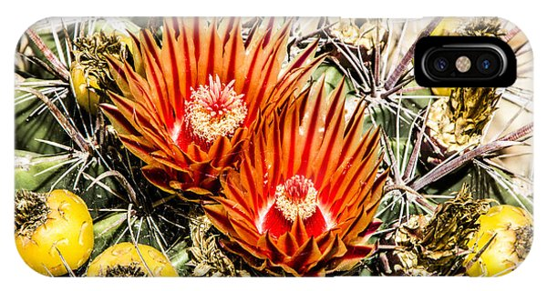 Cactus Flowers And Fruit IPhone Case