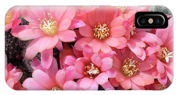 Cactus Rebutia Albiflora Phone Case by Nigel Downer/science Photo Library
