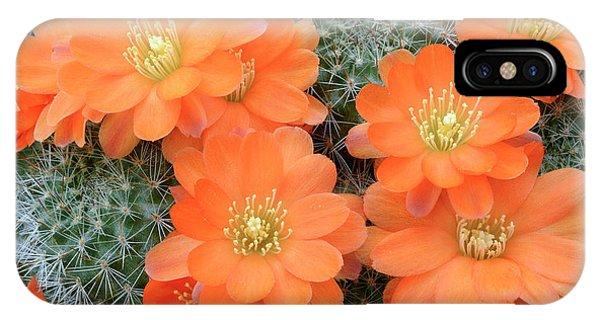 Cactus Rebutia Tamboensis Phone Case by Nigel Downer/science Photo Library