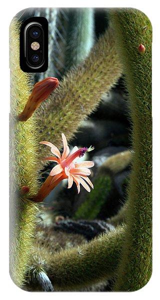 Adapted iPhone Case - Cactus (winterocereus Aureispina) by Jim West