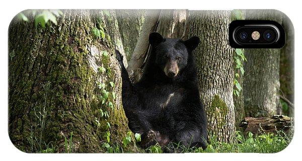 Cades Cove Bear IPhone Case