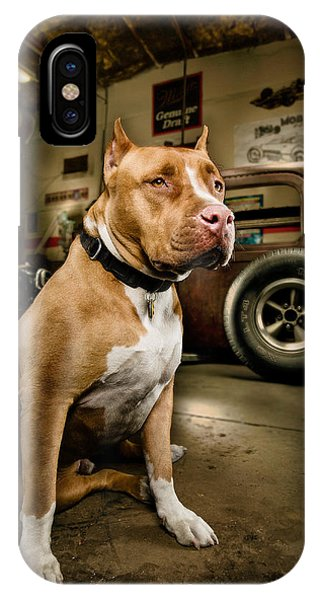 Pitbull iPhone Case - Caesar At Millers Chop Shop by Yo Pedro