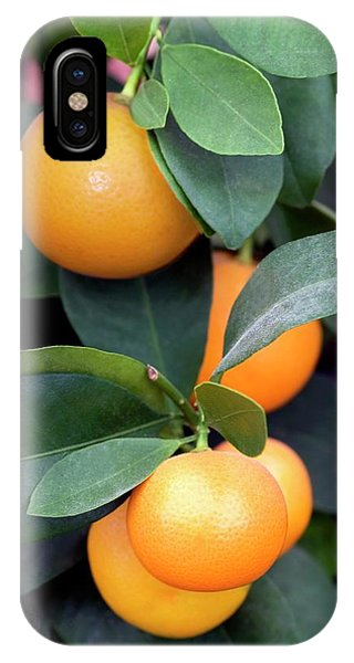 Calamondin (citrus Madurensis) Phone Case by Brian Gadsby/science Photo Library