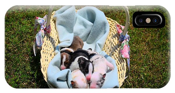 Calicos Pups At Two Days IPhone Case