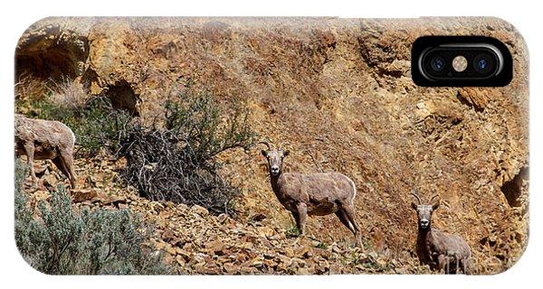 Rocky Mountain Bighorn Sheep iPhone Case - California Bighorn Sheep by Robert Bales