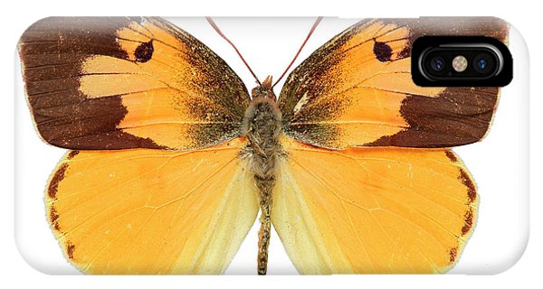 North London iPhone Case - California Dogface Butterfly by Natural History Museum, London/science Photo Library