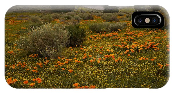 California Poppies In The Antelope Valley IPhone Case