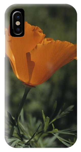 California Poppy Close Up IPhone Case