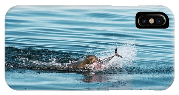 Skipjack iPhone Case - California Sea Lion Feeding by Christopher Swann/science Photo Library