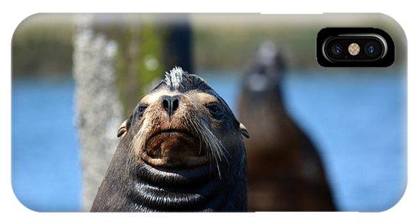 California Sea Lion IPhone Case