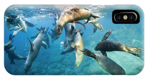 California Sea Lions And Snorkeller IPhone Case