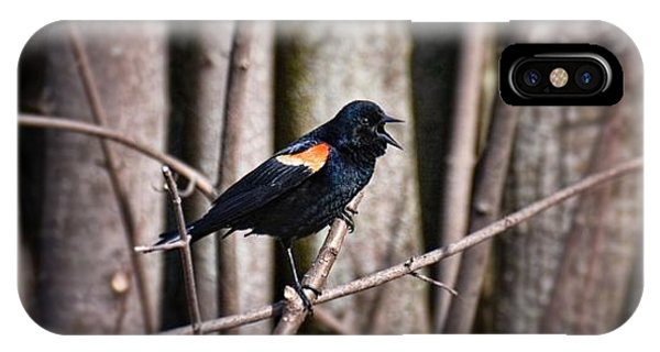 Call Of The Red Winged Blackbird IPhone Case