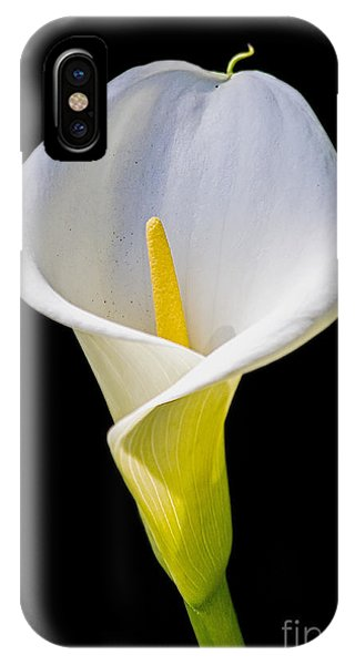 IPhone Case featuring the photograph Calla Lily by Kate Brown