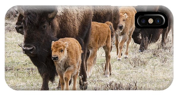 Calving Time Phone Case by Jill Bell
