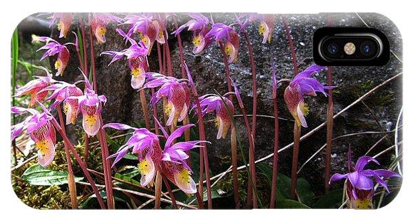 Calypso Orchids IPhone Case