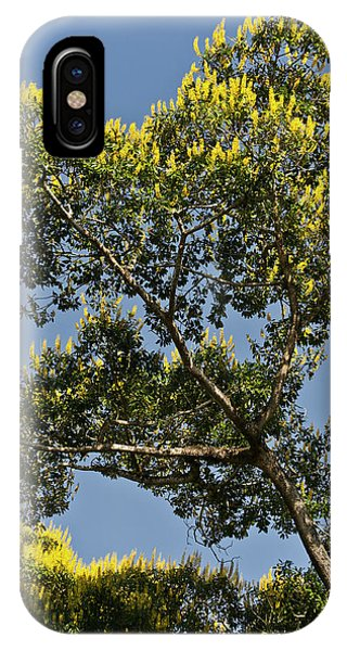 Yellow Trumpet iPhone Case - Cambara Trees Are Very Prolific by Jan and Stoney Edwards