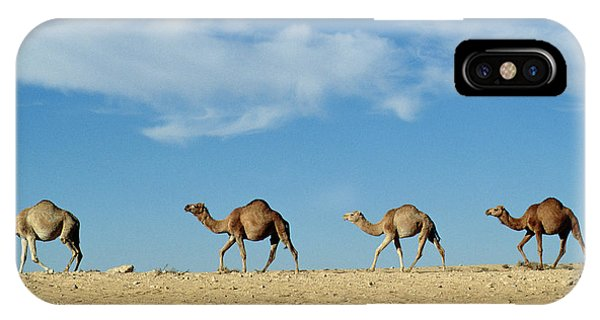 Desert iPhone Case - Camel Train by Anonymous