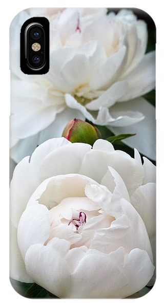 Camelia IPhone Case