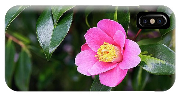 Camellia X Williamsii 'golden Spangles' Phone Case by Geoff Kidd/science Photo Library