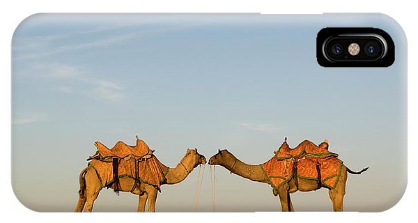 Camels Stand Face To Face In The Thar IPhone Case