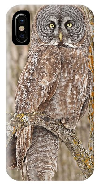 Camouflage-an Owl's Best Friend IPhone Case