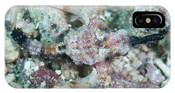 Adapted iPhone Case - Camouflaged Pegasus Sea Moth by Scubazoo