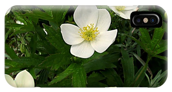 Canada Anemone - Anemone Canadensis - 11jn26 Phone Case by Robert G Mears