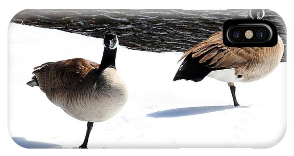 Canada Geese - Cold Feet IPhone Case