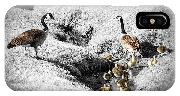 Goslings iPhone Case - Canada Geese Family by Elena Elisseeva