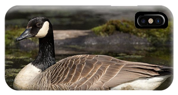Canada Goose Phone Case by Brian Magnier