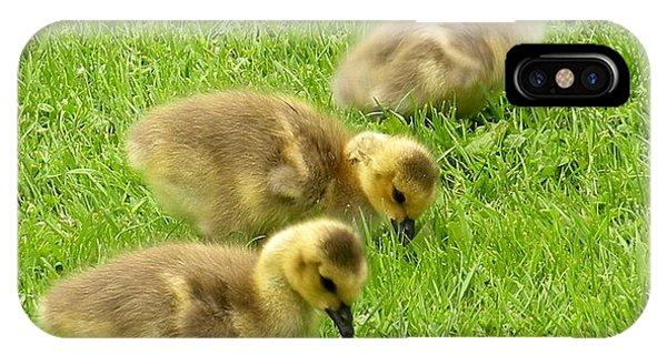 Canada Goose Goslings IPhone Case