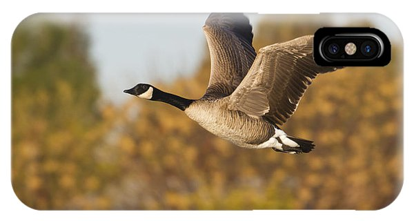 Canada Goose In The Skies  IPhone Case