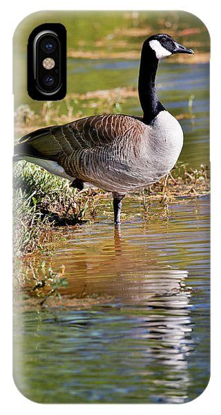 Canada Goose iPhone Case - Canada Goose Lakeside Reflection by Darrell Gulin