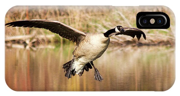 Canada Goose iPhone Case - Canada Goose Prepares To Land In Small by Chuck Haney