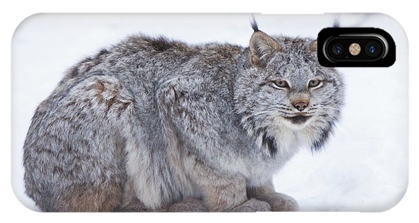 Winter iPhone Case - Canada Lynx Crouched On The Snowcovered by Doug Lindstrand