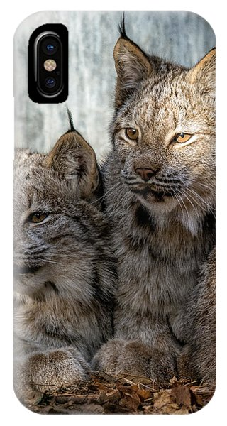 Canada Lynx IPhone Case