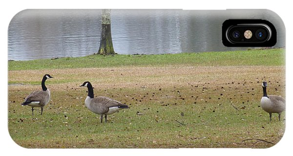 Canadian Geese Tourists IPhone Case