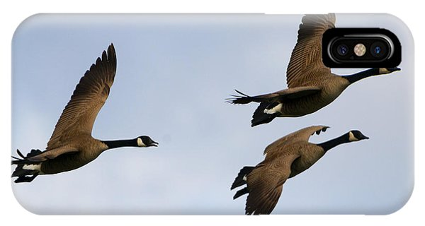 Canada Goose iPhone Case - Canadian Geese Trio by Mike Dawson