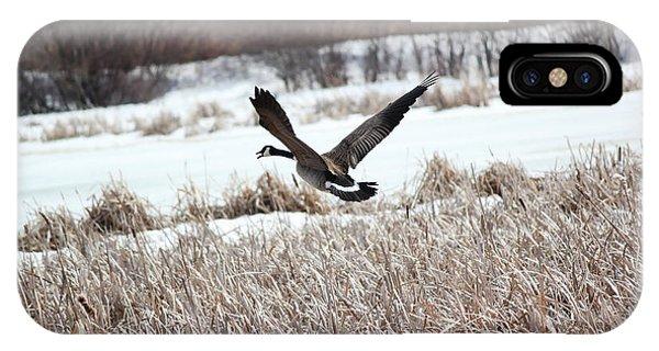 Canadian Goose IPhone Case