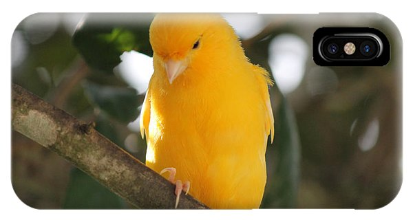 Canary Yellow Beauty IPhone Case