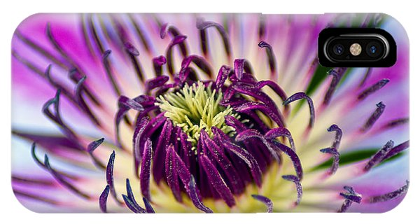 Candy Stripe Clematis IPhone Case